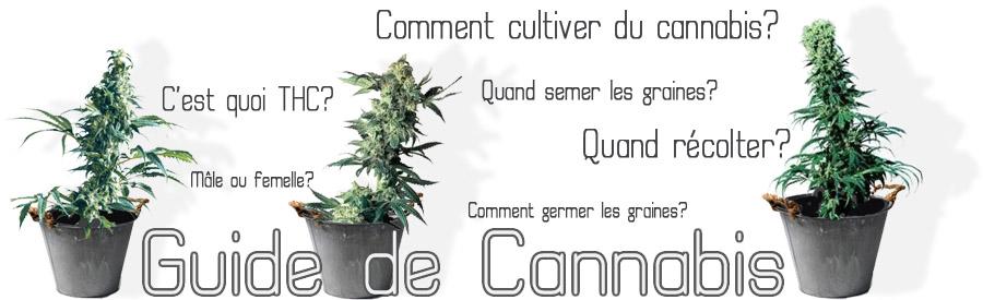 Engrais pour cannabis interieur 28 images culture de for Guide de culture de cannabis en interieur