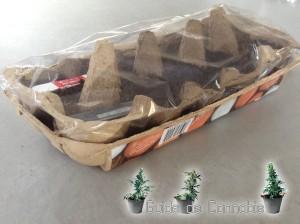 boite pour la germination de graines de cannabis fait maison