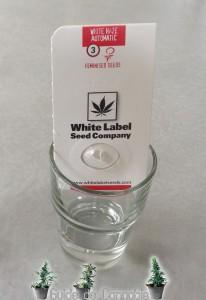 emballage graines cannabis